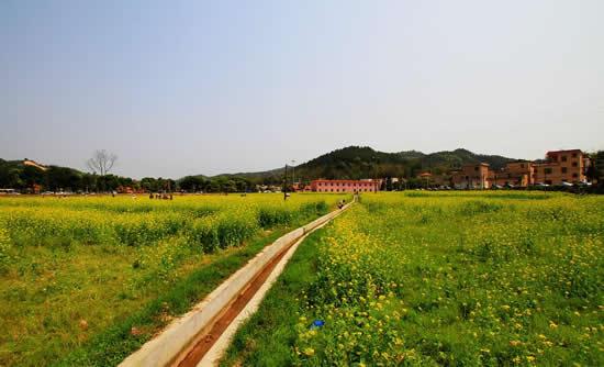 广州一日游到最美山村观赏油菜花