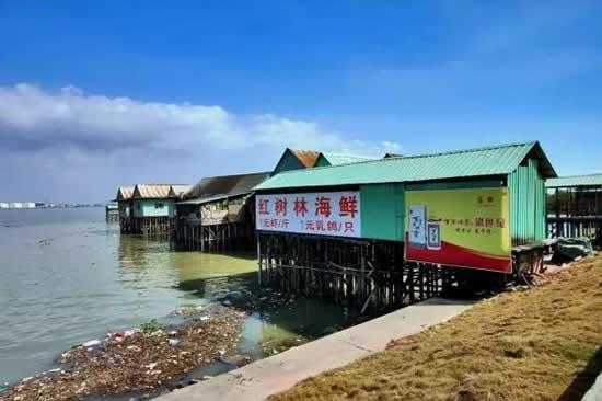 广州一日游到番禺海鸥岛钓鱼虾蟹