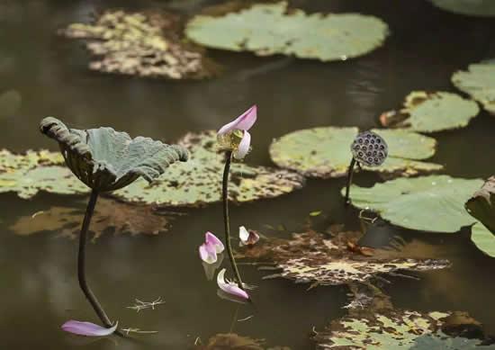 广州一日游到南沙湿地公园拍荷花