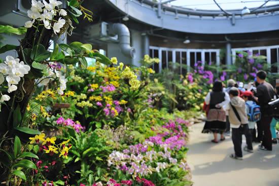 广州首次举办国际花卉艺术展