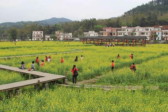 广东最美森林小镇广州最多