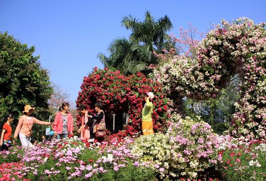 广州一日游到流花公园看簕杜鹃主题花展