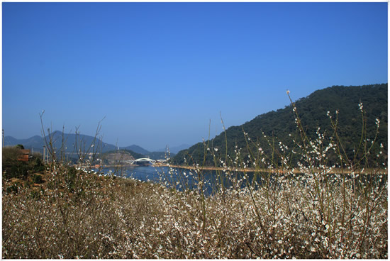 广州一日游到流溪河森林公园欣赏流溪香雪