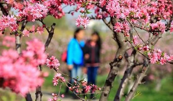 广州冬季一日游赏花攻略