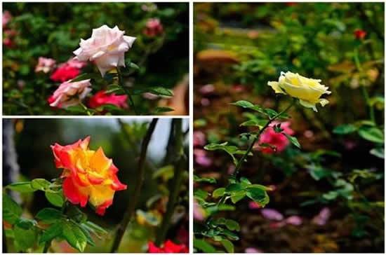 新年广州一日游到白云山云台花园赏花