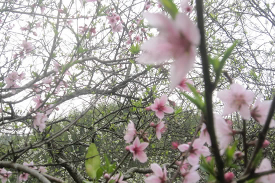 广州一日游到最美村落溪头村赏花吧!
