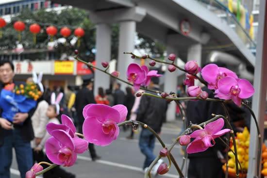 双门底年宵花市是广州春节花市的鼻祖