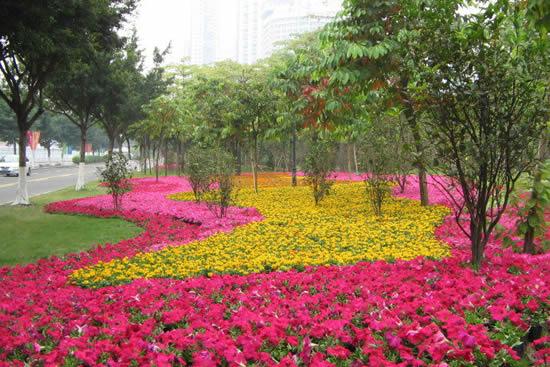 广州明清时期的花埭最受宠爱素馨