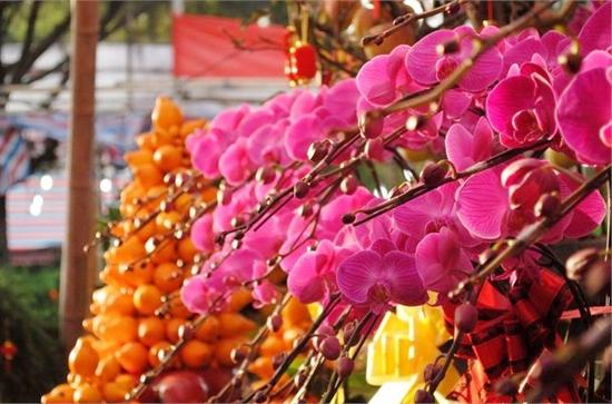 广州花市的发展历史你知多少?