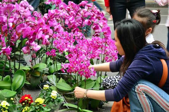 2018年广州传统迎春花市接待游客508万人次