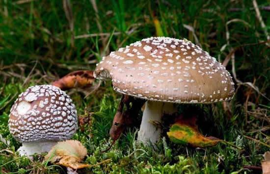 哪些蘑菇不能吃 误食毒蘑菇怎么办