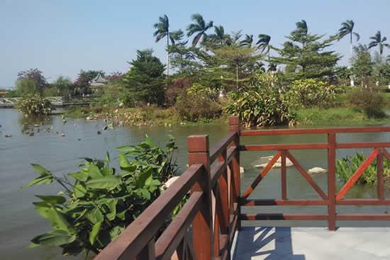 绿肺海珠湖湿地公园成为市内赏花热点