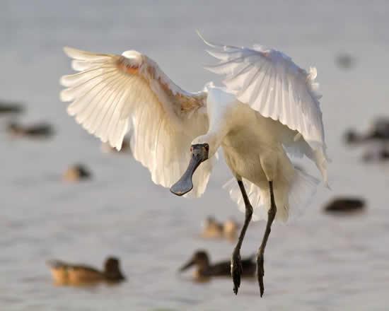 广州五大最佳观鸟好去处推荐
