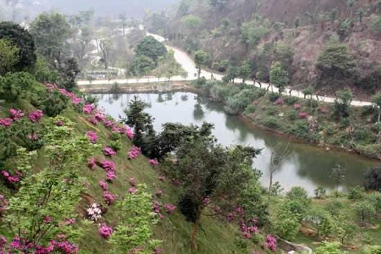 广州从化区有哪些赏花的景点?