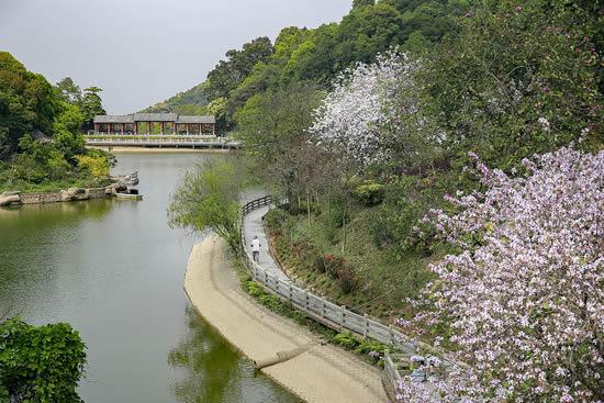 广州帽峰山森林公园四月自驾游攻略