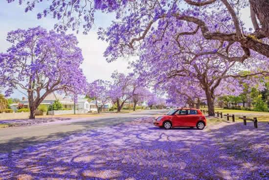 广州城中四月一日游赏花好去处
