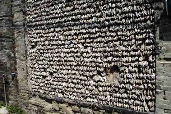广州蚝壳筑墙的建筑艺术你知道多少?