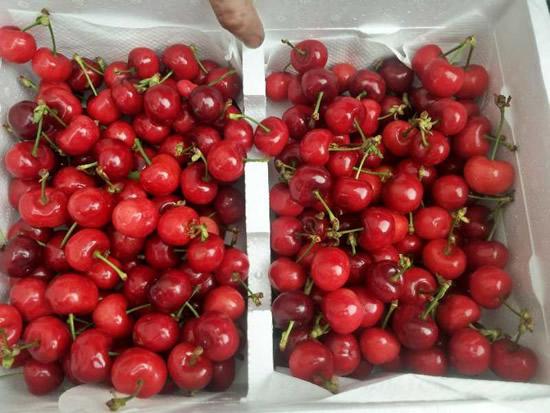 20吨来自美国加州的樱桃搭乘南航航班运抵广州