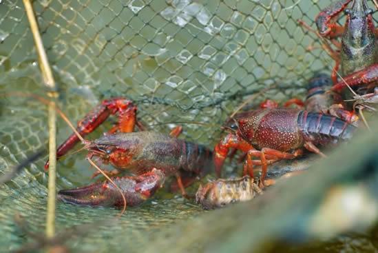 广州夏日宵夜吃什么最好?各位各样的小龙虾你吃过多少?