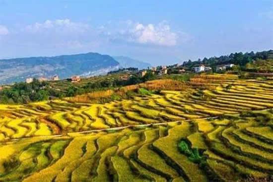 广州着眼发展观光休闲农业,2020年培养30家3A乡村游景区!