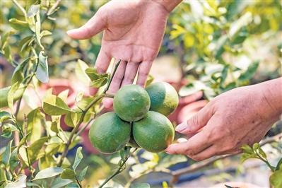 广州一日游哪里好玩?带你到白云区江高镇罗汉松植物庄园体验生活!