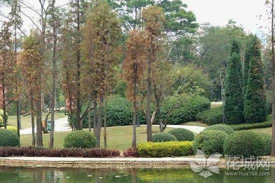 广州黄埔公园要升级改造,计划拆围透绿打造城市优质景观!