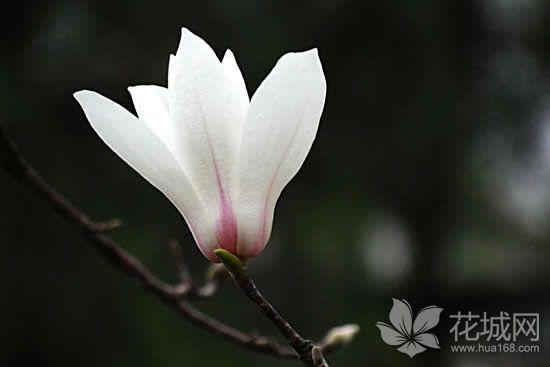 广州体育西路人行道树将种白玉兰,对公共空间进行精细化提升!