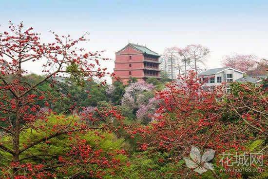 2018广州国际花卉艺术展将在花城登场,带给市民视觉冲击与文化享受!