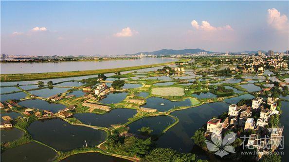 广东鹤山将建立古劳水乡省级湿地公园,一幅幅如诗如画的美景!
