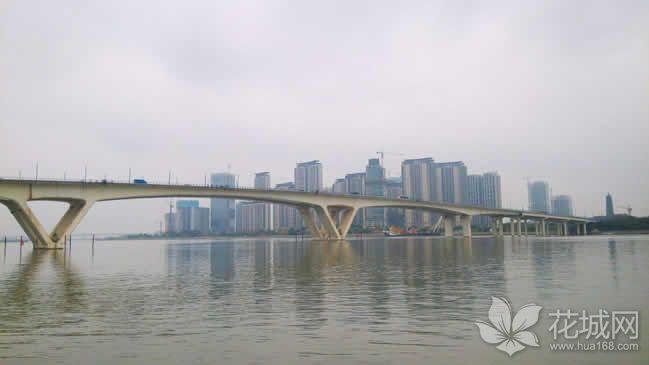 无人港用囤船走锚广州琶洲大桥受损,仍因此处于双向封闭状态!