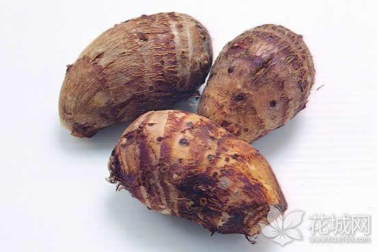 中秋的味道:大块头有好味道的乐昌芋头你吃过没?